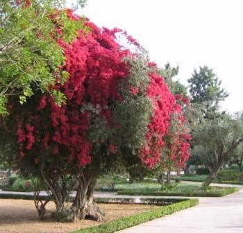 Jnane-Harti-Excursion-Botanique-Marrakech-SejourMaroc